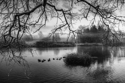 River Water Branches Fog Nature Landscape Trees