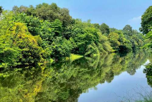 Riverside Greenery Water Nature Sky