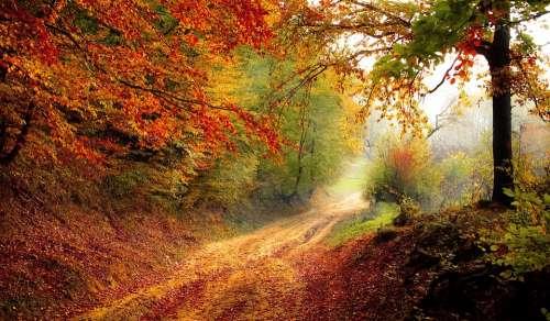 Road Forest Season Autumn Fall Landscape Nature