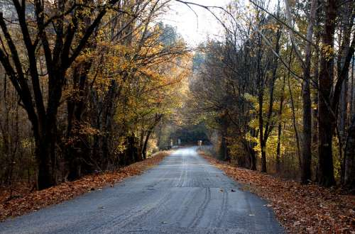 Road Tree Landscape Forest Nature Path Outdoors