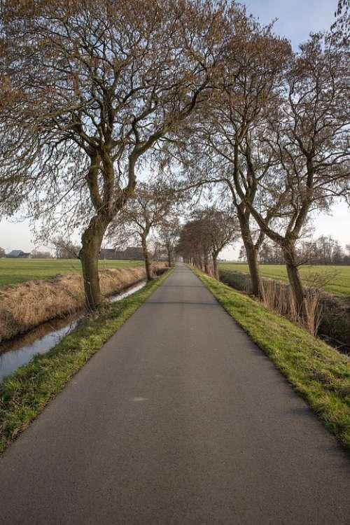 Road Landscape Trees Buitenweg Path Nature Hiking