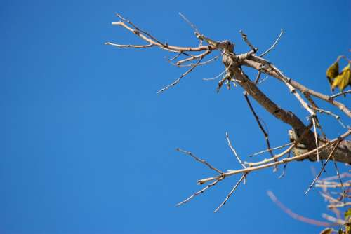 Branch Autumn Sky Crooked Gnarled Branches Kahl
