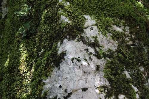 Rock Moss Mountain Green Nature