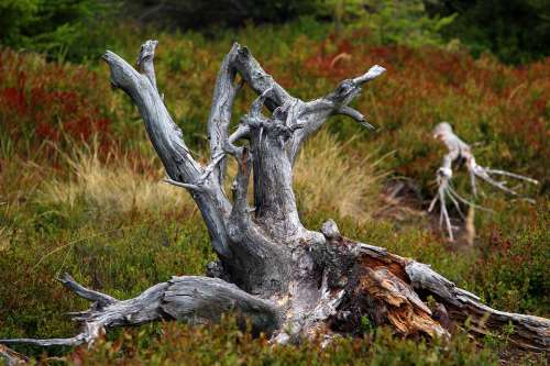 Root Reserve Trunk Nature Knotty Dry