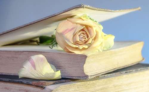 Rose Book Old Book Blossom Bloom Rosenblatt Used