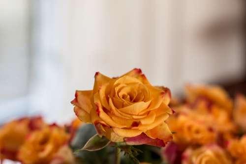 Rose Bouquet Orange Flowers