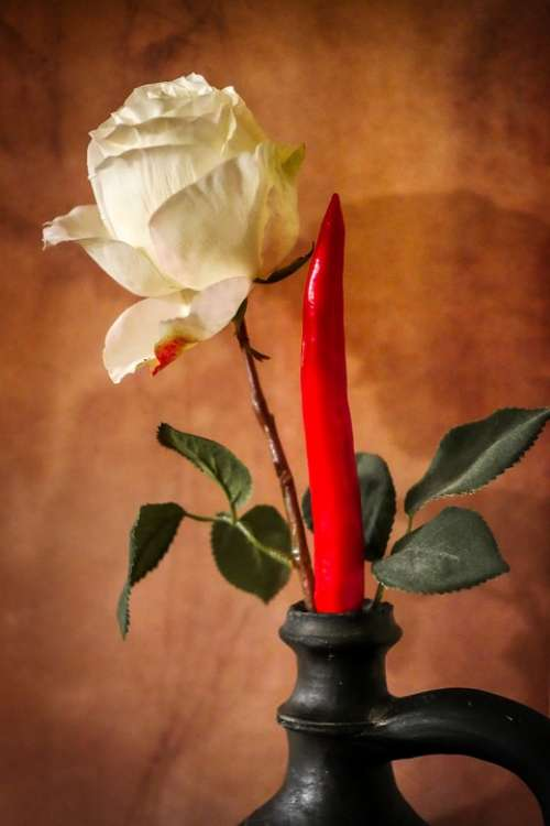 Rose Flower Paprika Chilli Blossom Bloom Romantic