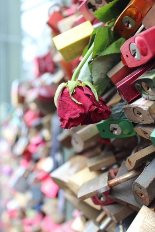 Rose Flower Faded Padlocks Love Locks Cologne