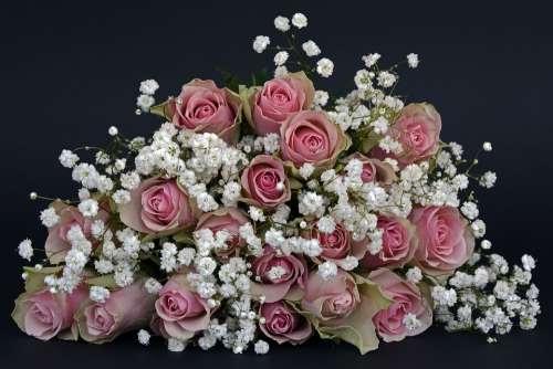 Roses Rose Flower Flowers Pink White Gypsophila