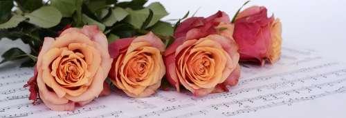 Roses Orange Flowers Sheet Music Music Notenblatt