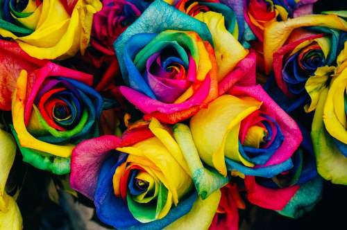 Roses Colored Tinted Colorful Artificial Flowers