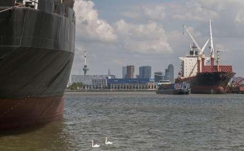 Rotterdam Port Boat Swan Skyline Water
