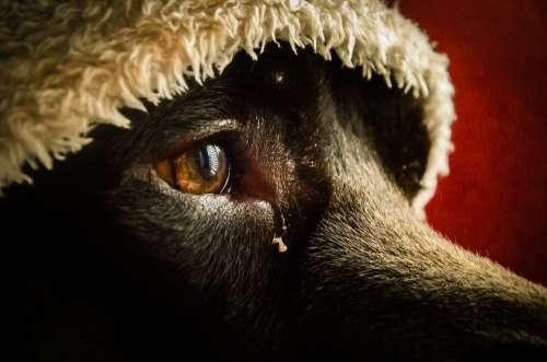 Sadness Nostalgia Thinking Reflection Dog