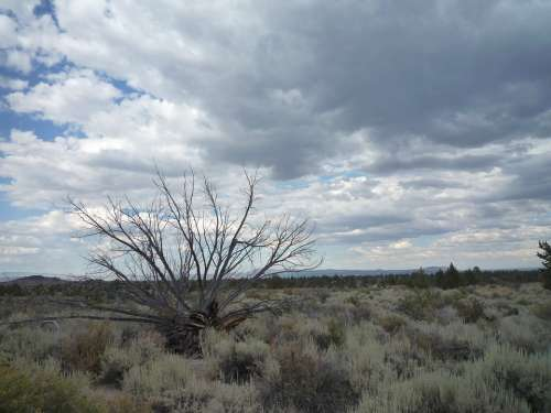 Sagebrush Desert Dead Tree Juniper Lava Beds Sky
