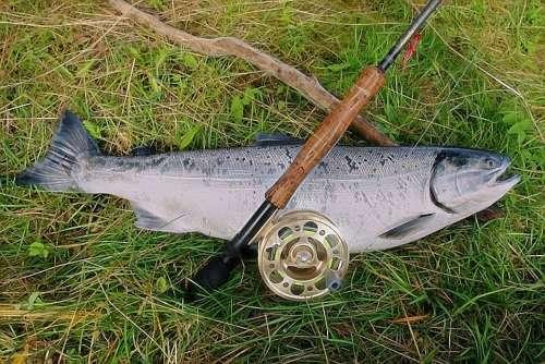 Salmon Rod Reel Alaska Fishing Fish River Catch