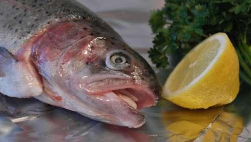 Salmon Trout Trout Fish Fish Head Lemon Eat Food