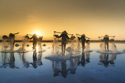 Salt Harvesting Vietnam Hon Khoi Salt Field Salina