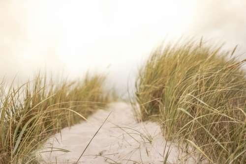 Sand Grass Beach Nature Summer Coastal Seaside