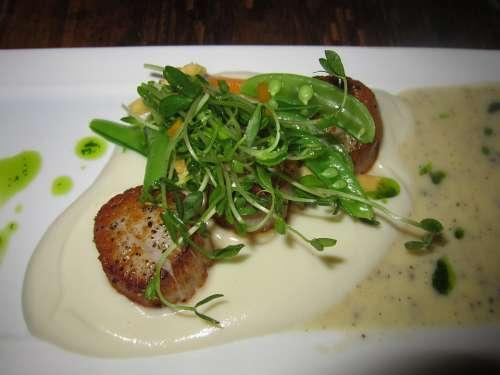Scallops Seafood Di Food Meal Dinner Gourmet
