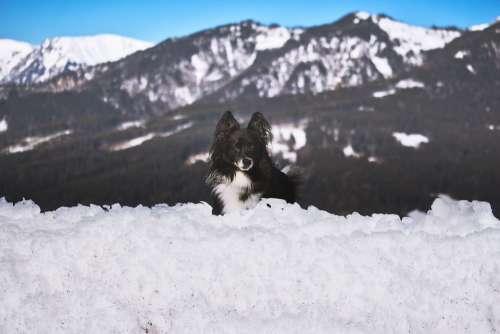 Schneealpe Styria Dog Hiking Austria Mountains