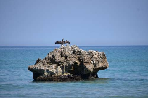 Sea Island Nest Cormorant Blue Sky Coast Summer