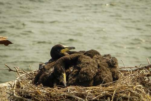 Sea Ship Costinesti Water Birds Summer Romania