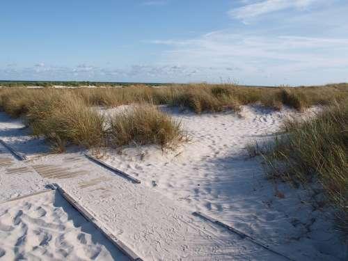 Sea Dune Dune Grass Coast Baltic Sea Landscape