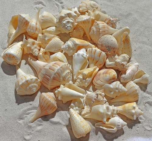 Sea Shells Sea Beach Sand Nature Summer