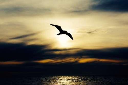 Seabird Bird Nature Animal Seagull Flight Wings