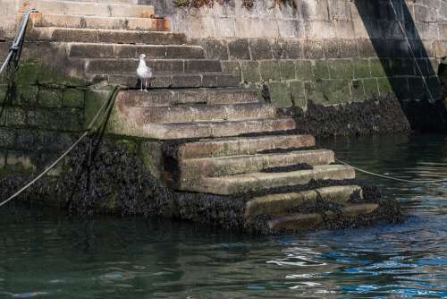 Seagull Harbor Stairs Step Water Sea Gull Bird