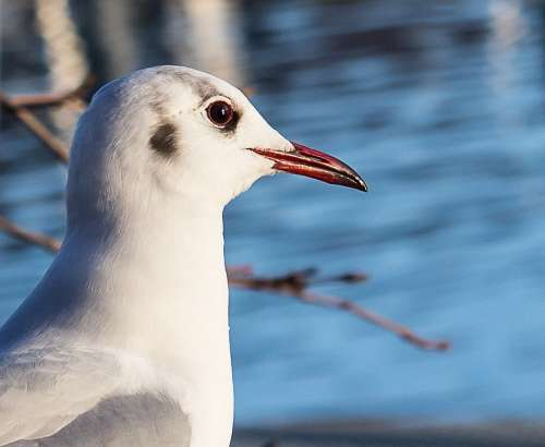 Seagull Bird Animal Animal World Nature Water Bird