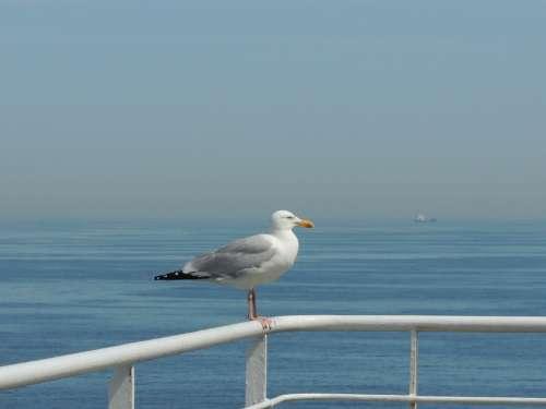 Seagull Bird Water England Sky Summer France