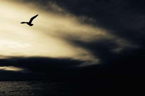 Seagull Nature Animal Bird Seabird Flying Away