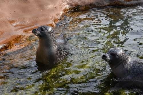 Seal Zoo Water Animal