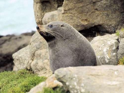Seal Rocks Mammal Nature Wildlife