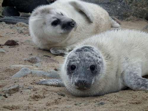 Seals Seal Sea Mammal Nature Cute Animals Beach