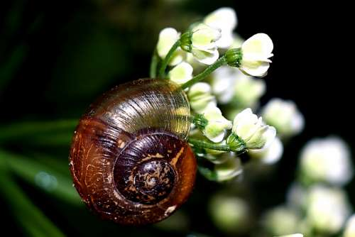 Seashell Snail Macro Nature