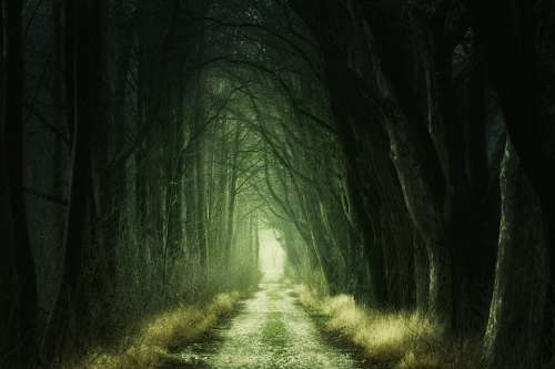 Secret Forest Darkness Nature Trees Avenue