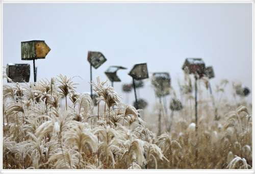 Seoul Sky Park Snow Temperature Day Silver Grass