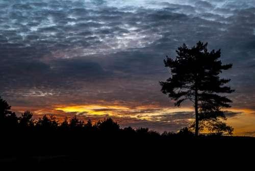 Setting Sun Cloudy Sky Tree