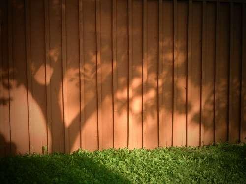 Shadow Tree Wood Grass Sun Morning Rural