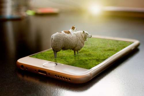 Sheep Manipulation Grass Dog Mobile Iphone