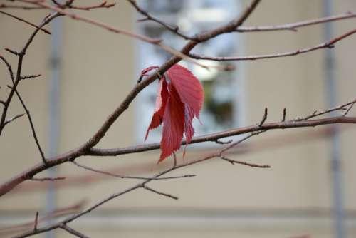 Sheet Autumn Season Mood Sadly One Last