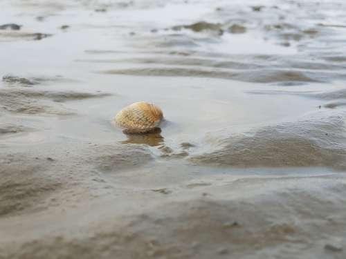 Shell Sea Watts Sand Beach Water Mussels Ocean