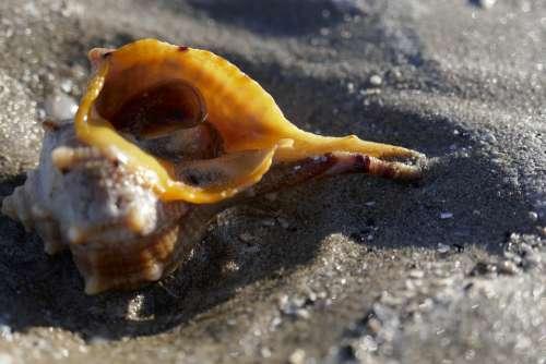 Shell Sea Water Summer Beach Holidays Shells