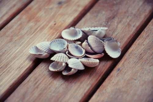 Shells Closeup Nature Crustaceans
