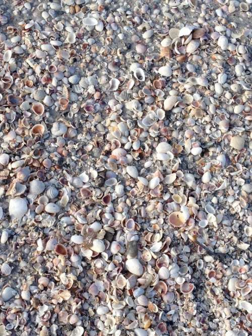 Shells Seashore Beach Vacation Seashell Ocean