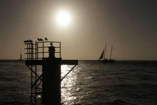 Silhouette Sunset Birds Sky Ocean Evening