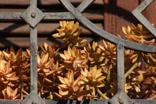Sill Fat Plants Succulents Succulent Plant Window