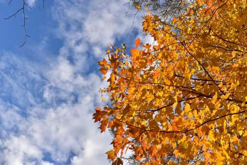 Sky Cloud Clouds Tree Autumn Nature Fall Leaves
